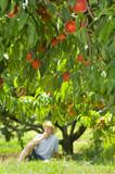 peach eater poster