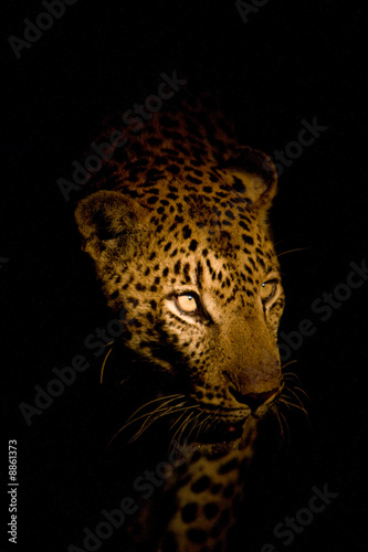 Fotobehang Luipaard Leopard Portrait bei Nacht
