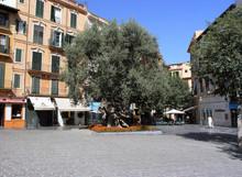Alter Olivenbaum en Palma de Mallorca