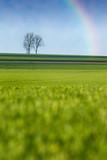 pré champs arbre arc ciel campagne culture agriculture vert natu poster