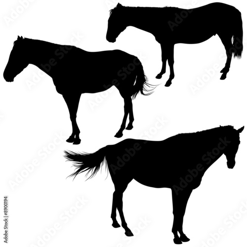 Horses Silhouettes 7 - detailed  illustrations