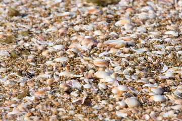 colorful sea shells