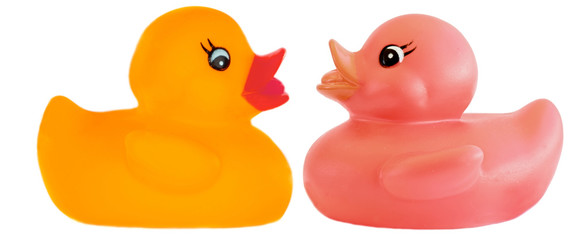 Two plastic duck a over white background