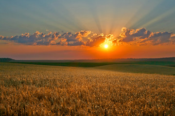 Yellow field on a background of magic sky