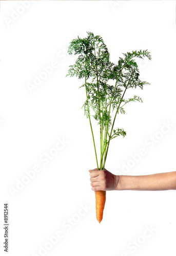 Fresh carrot in hand isolated on white
