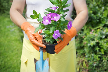 Cropped view of senior woman holding flower pot in garden