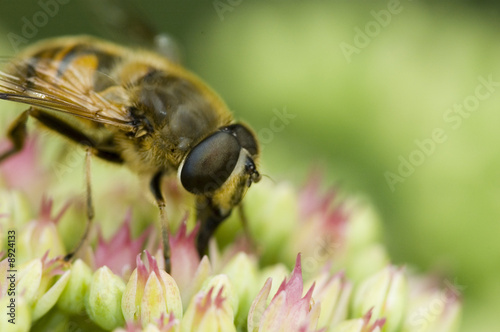 Little pink flowers with bee and green background