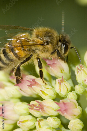 Bee on a flower in summertime