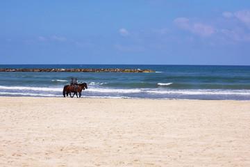 Horse patrol on a beach of the warm dark blue sea