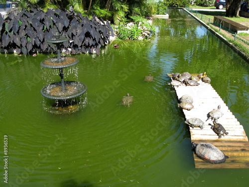 Leinwanddruck Bild Bassin avec fontaine et tortues. Rio de Janeiro, Brésil.