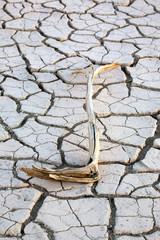 Ein Vlei in einer Sanddüne im Death Valley