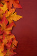 Yellow and red fall leaves on wood background