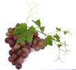 black grapes on vine isolated on white