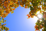 Blue sky is framed in fall foliage with sun shining through poster