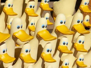 des canards... des canards ...