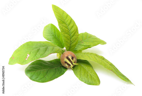 Medlar fruits with leaves