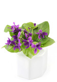A bunch of violets in a small white porcelain vase. poster