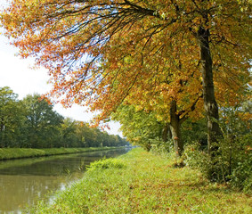 Autumn trees near the river