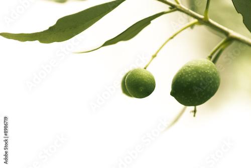 Tuinposter Olijfboom décoration série - olives isolées sur un fond blanc