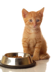 orange tabby kitten sitting beside the food bowl -