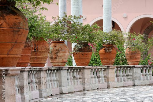 Bugenvilia tree  in an outdoor urns by marble balustrade