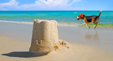 Dog prancing by pretty sand castle built at seashore poster
