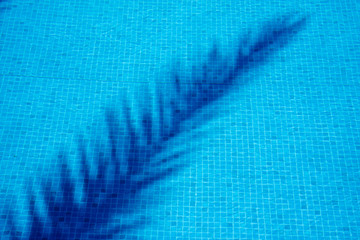 The shadow of a palm leaf in the pool