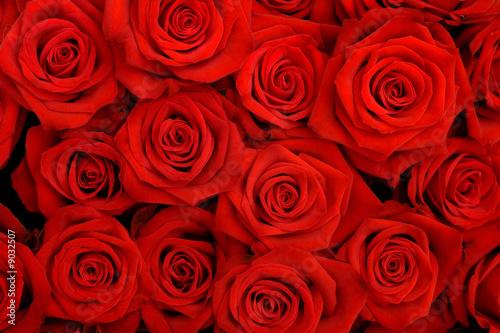 Naklejka Wielki bukiet czerwonych róż