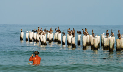 Birds perched on a pier on the Florida coastline