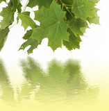 seasonal background - leaves and water reflection poster