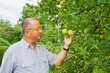 Man examining the apple production