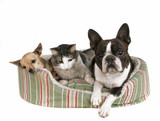 two dogs and a kitten in a pet bed poster