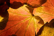 Background made of autumn leaves showing every vein or nerve