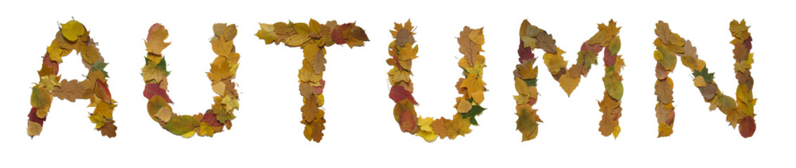 """Word """"autumn"""" made from yellow leaves"""
