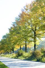 Autumn trees near the street