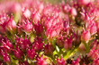 Pink flowers with shallow depth of field