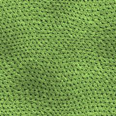 Lizard Texture