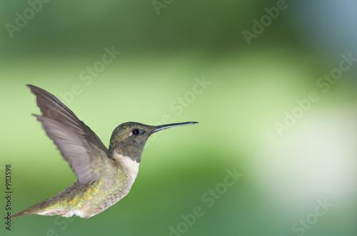 Leinwanddruck Bild Hummingbird in profile 2