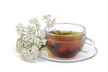 Tee Schafgarbe - tea yarrow 01