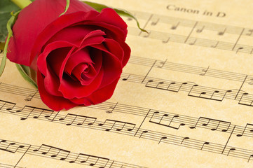 A red rose bud rests on Pachelbel's 'Canon in D'  sheet music