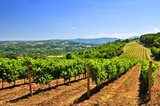 Summer landscape with vineyard in rural Serbia poster