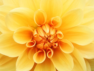 A photography of a orange flower background