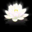 fleur de lotus blanc sur fond noir avec reflets