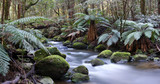 Panorama of river in a rainforest . Yarra Ranges, Australia