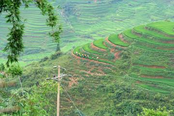 H'Mong dans les rizières en terrasse