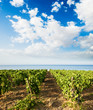 landscaped for vineyard on the sea