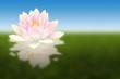 fleur de lotus avec reflets