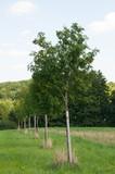 Bäume10
