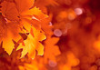 Leinwanddruck Bild - autumn leaves, very shallow focus