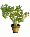 succulent potted plant poster